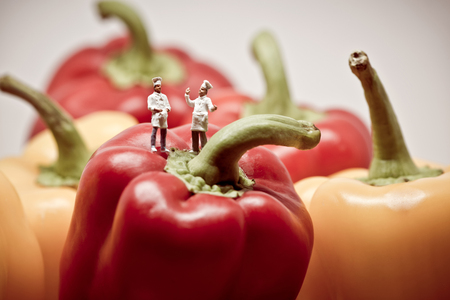 Two chefs debating over bell peppers. Macro photo. Stock Photo