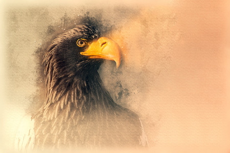 Stellers sea eagle sketch. Digital illustration Lizenzfreie Bilder