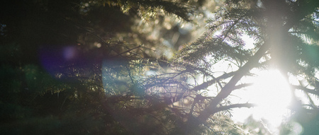 glare and the suns rays filtering through the branches of trees