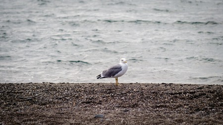 one seagull looks at a storm at sea Stok Fotoğraf