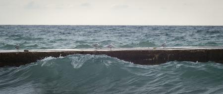 Blacksea, seagull walking on the breakwater