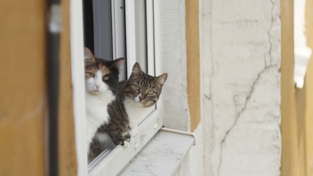 two cats sitting on the window of an apartment house looking at the camera