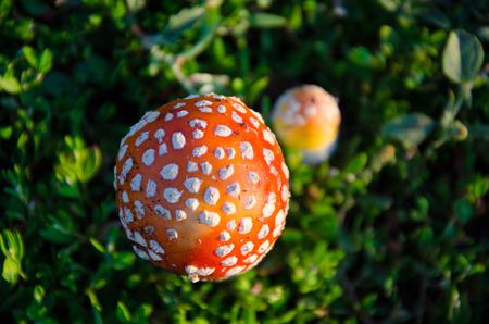 mushroom on a beautiful background of green grass photo
