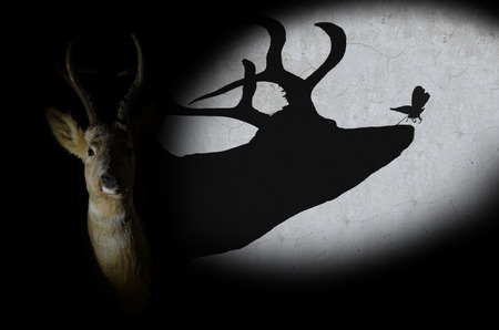 deer on a black background and shadow which represents kindness and life photo