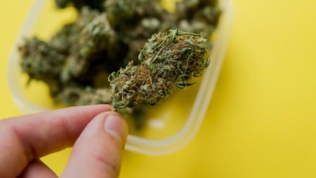 Types Of Marijuana - Sativa, Indica and Ruderalis Stock Photo