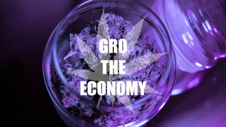 growing healing marijuana strains in the United States of America.