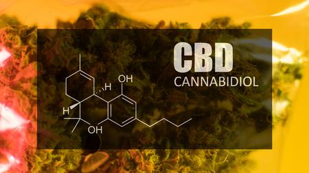 Bid marijuana buds of strong strain with the image of the formula CBD cannabidiol