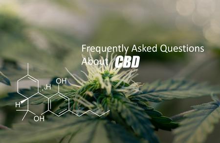 growing medical marijuana indoor close-up. THC element logo