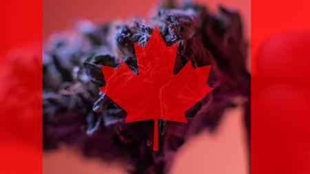 legalization of medical marijuana in Canada in 2019