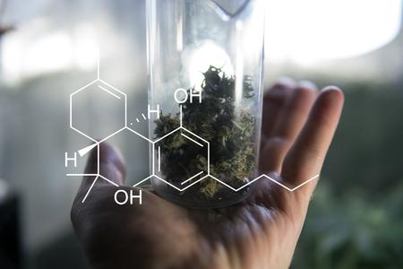 marijuana buds strains close-up Banco de Imagens