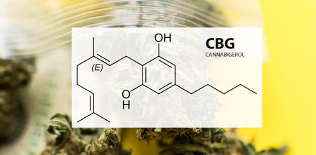 Cannabigerol (CBG) in Medical Marijuana Studies 写真素材