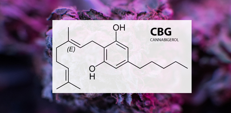 Cannabigerol (CBG) in Medical Marijuana Studies Stok Fotoğraf