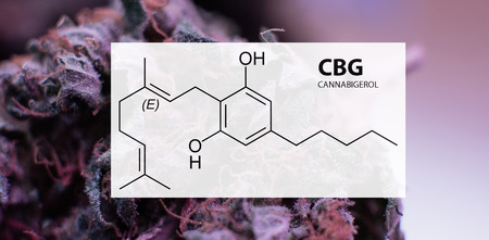 Cannabigerol (CBG) in Medical Marijuana Studies Stock Photo