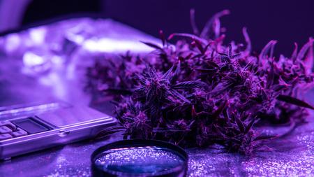 New medical strains of marijuana. 版權商用圖片