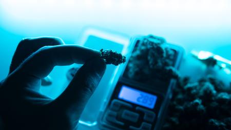 Legalize it. Smoking marijuana concept for publications Фото со стока