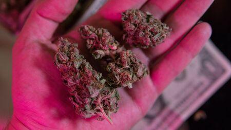 Cannabis marijuana sativa heads background.
