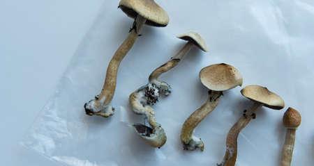 the benefits of recreational use of magic mushrooms. Psilocybin and mental illness