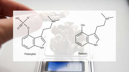 the medical effects of psilocybin and psilocin on the psychological and physical health of people. Legalization of the recreational use of psilocybin mushrooms