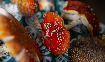 Amanita muscaria poisonous psychoactive mushroom of the genus Amanita, or Amanita. The psychedelic experience of eating amanita
