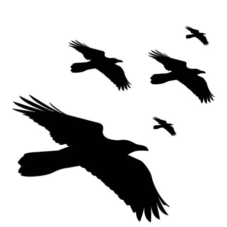 seamless vector pattern with flying black ravens on white background
