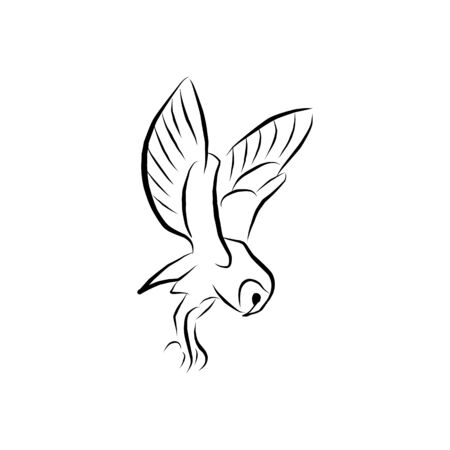 vector Flying Owl, spread out its feather. Illustration