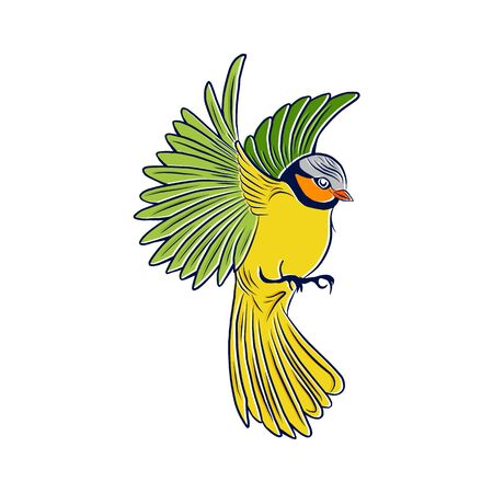 Vector illustration with tit on white isolated background. Stock Illustratie