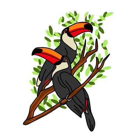 Exotic bird toucan. Hand drawn toucan on white background. Vector set of tropical birds isolated on white. Jungle tropical birds black color. Concept of wildlife and nature. Icon of exotic bird