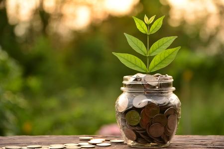 la moneda en vidrio se coloca en un piso de madera y el top del árbol que crece con el fondo de la naturaleza para el concepto del negocio.
