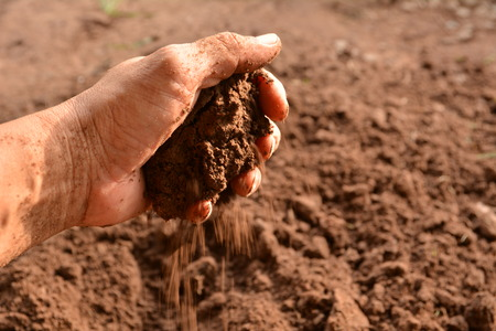 The man holding soil in the hands for planting.