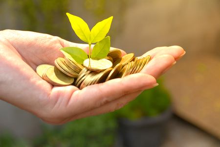 Saving money concept and hand holding money coin with tree growing for business 版權商用圖片