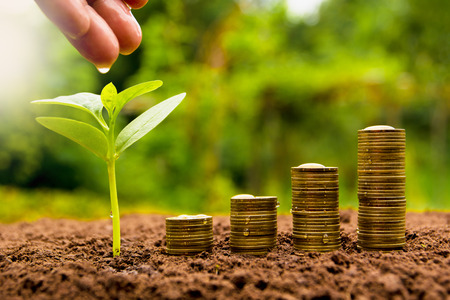 Female hand watering young plant with stack coin for growing business