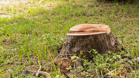 Stump on green grass in the garden. Old tree stump in the summer park. 版權商用圖片