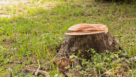Stump on green grass in the garden. Old tree stump in the summer park. Foto de archivo