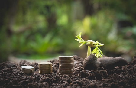 Young green plant with stack coin on ground for growing business financial concept. Stock Photo