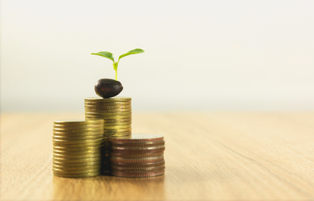 Concept of money tree growing from money on wooden table. Financial and saving concept.