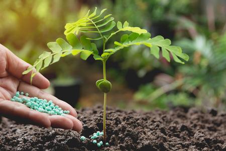 인간의 손에 의해 묘 목 개념을 적용 비료 젊은 트리 녹색 배경
