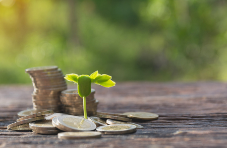 Concept of money tree growing from money. Financial and saving concept. Stock Photo