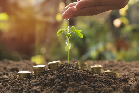 Pouring a young plant from hand with stack coins. Gardening and watering plants. Business growing concept.