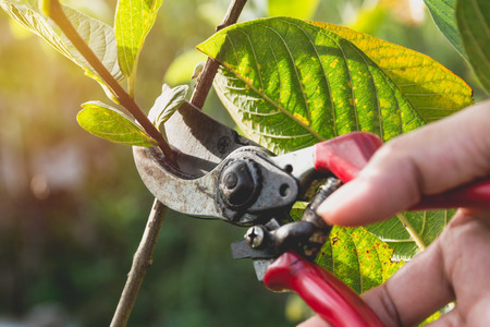 Gardener pruning trees with pruning shears on nature background. Stock fotó - 90514685