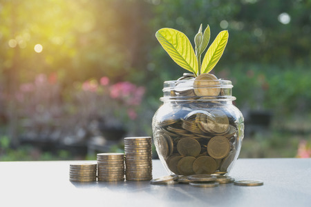 Saving money concept with money coin in the jar and green plant for growing business, financial and accounting concept.