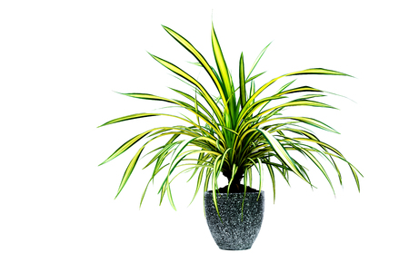 Green potted plant, trees in the cement pot isolated on white background. 版權商用圖片 - 101591617