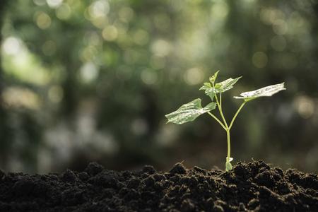 Sämling und Pflanzen wachsen im Boden und kopieren Platz für Text einfügen