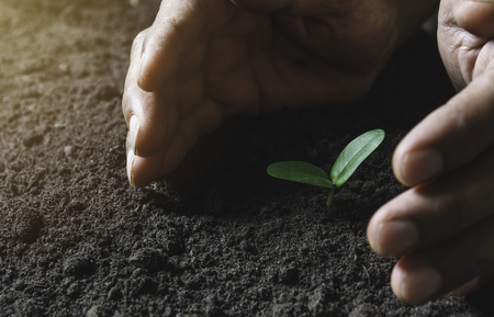 Hand protecting a green young plant with growing in the soil on nature background. Stock Photo