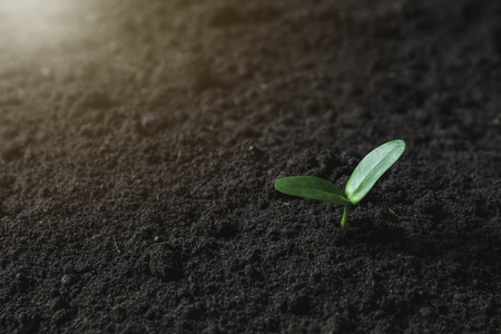 Seedling and plant growing in soil and copy space for insert text Stock Photo