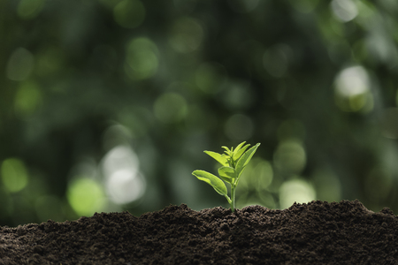 Seedling and plant growing in soil and copy space for insert text