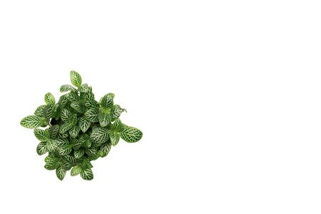 Green plant, green leave isolated on white background with copy space.