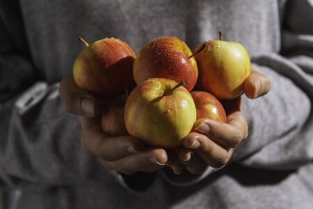 Male hands holding freshly harvested apples. Fruit and healthy concept. Stok Fotoğraf