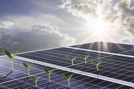 Solar panels or Solar cell in with orange sky and green plant. Alternative electricity source and energy concept