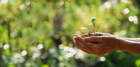 Hand holding a green and small plant. Green fresh plants on nature background. 版權商用圖片 - 149305689