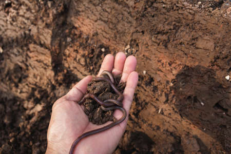 Hand of male holding soil with earthworm in the hands for planting with copy space for insert text.